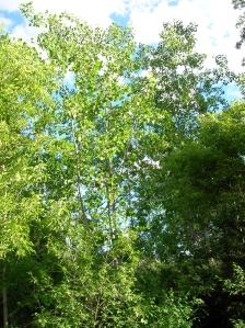 Said woods.